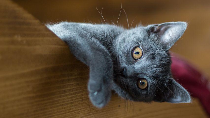 A quoi sert un griffoir pour chat ?