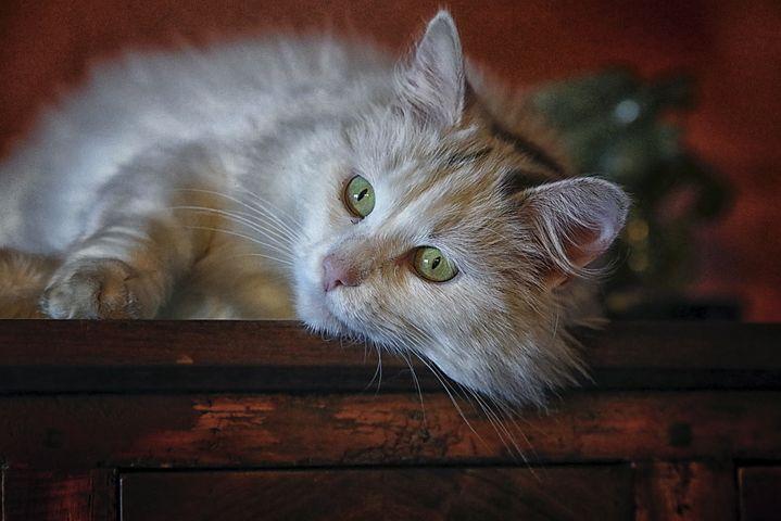 Des informations sur le langage corporel du chat