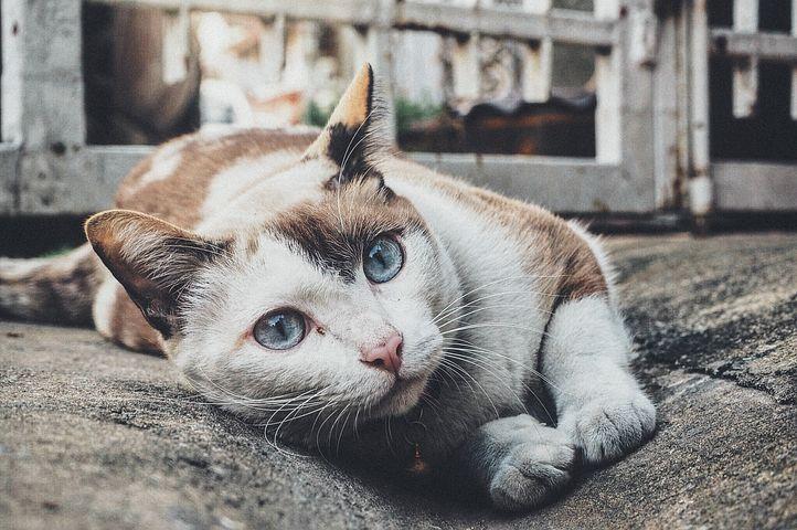 Alimentation du chat : croquettes ou boîte ?