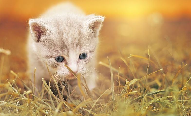 Qu'est-ce que la leucose des chats ?
