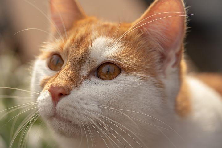 L'importance du vétérinaire pour mon chat