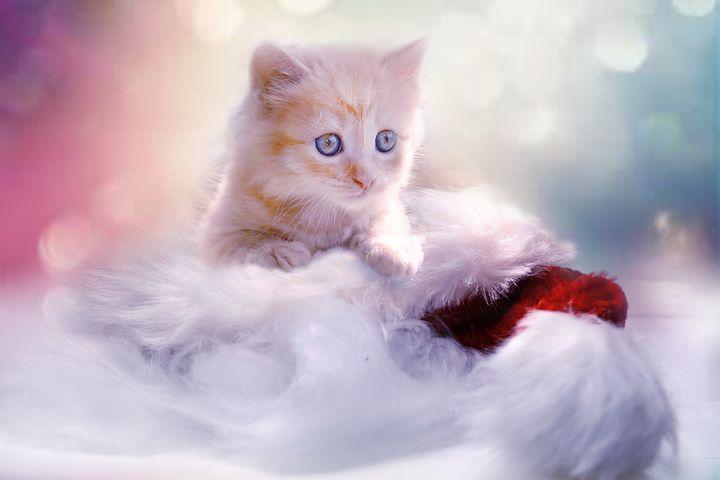 Quelle litière pour chat acheter ?